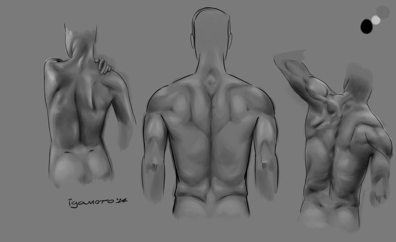 human back muscles study by igamoto on deviantart, Muscles