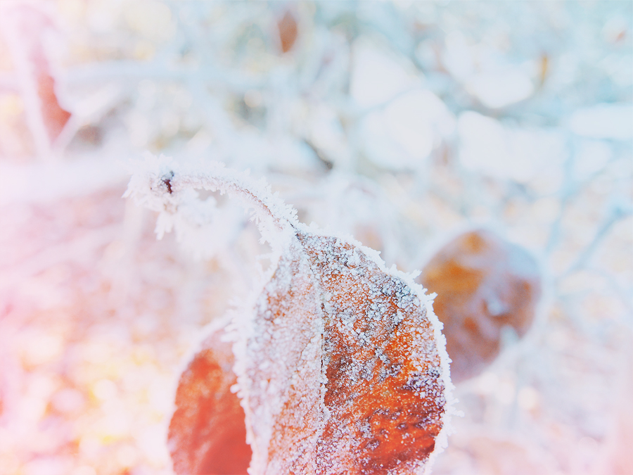Winter leaf by annbuht
