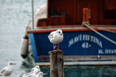 seagull by ozycan