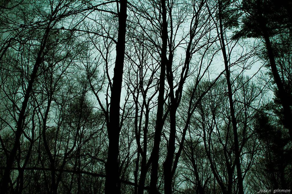 Foggy Woods 1 by JasonGinman