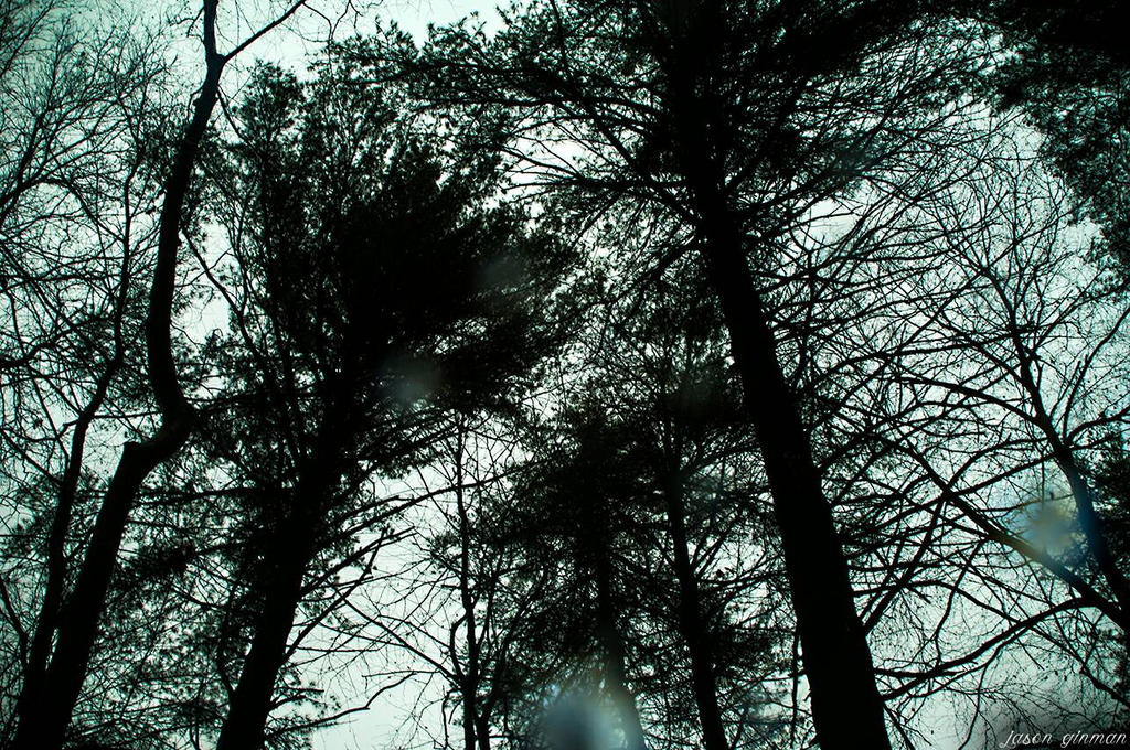 Foggy Woods 2 by JasonGinman