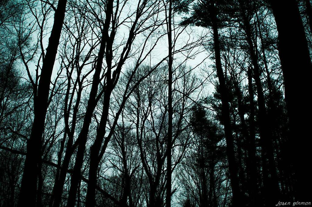 Foggy Woods 3 by JasonGinman