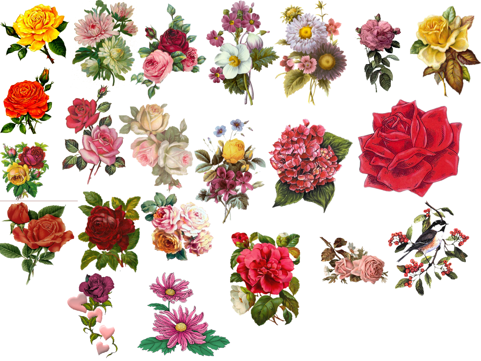 Vintage Flower Pictures - Beautiful Flowers