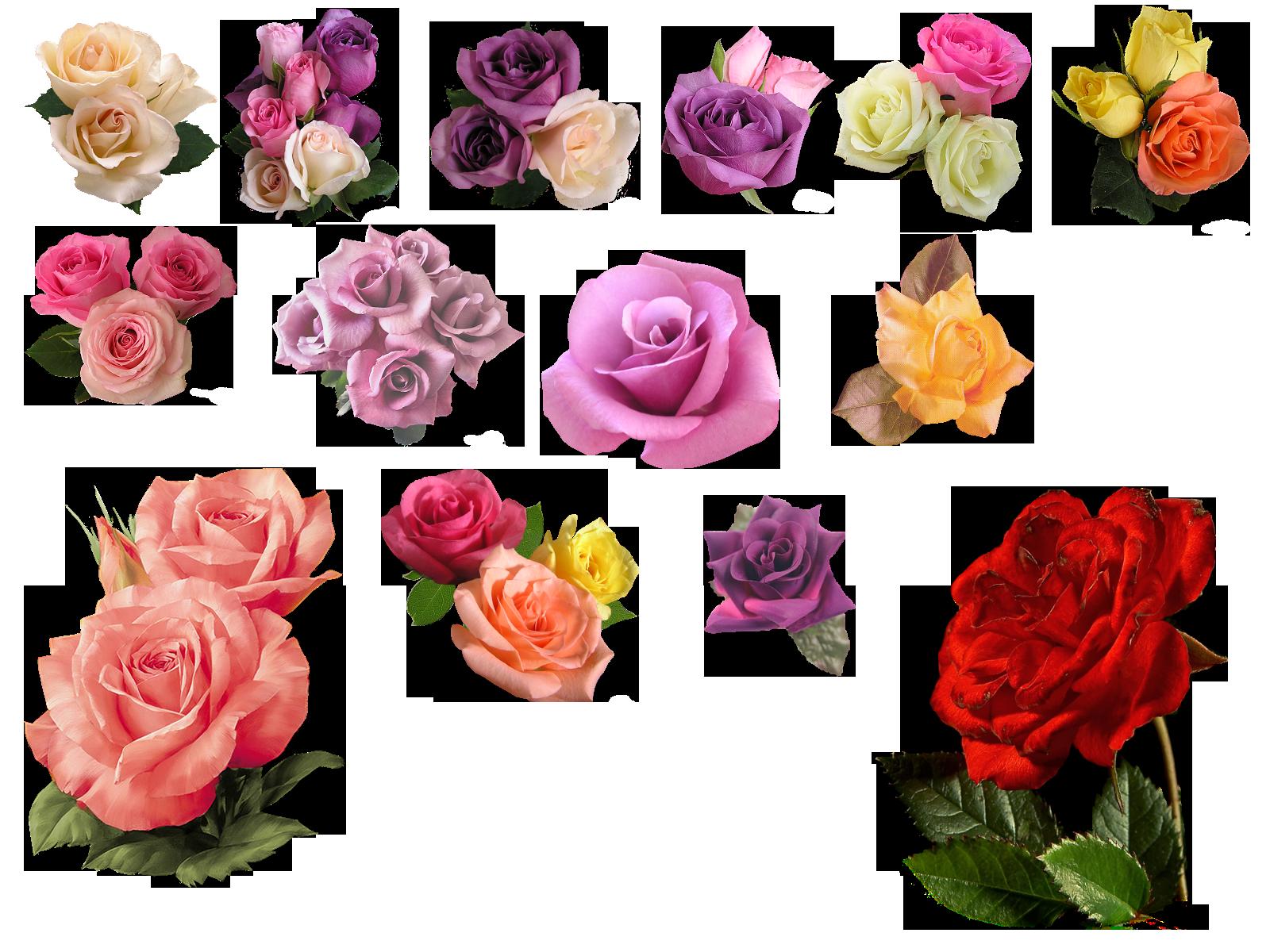 png rose by HaSiYnE on DeviantArt