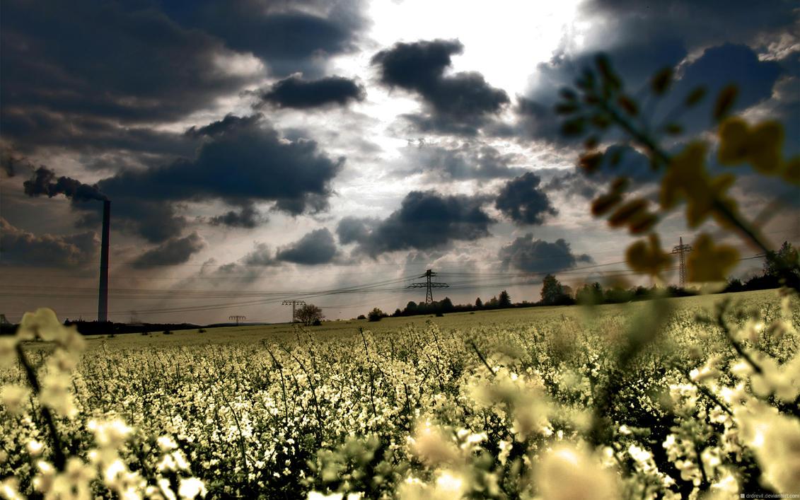 White Autumn by drdrevil