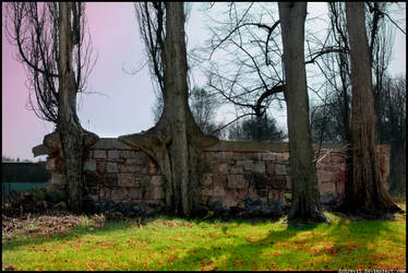 Wall and Trees