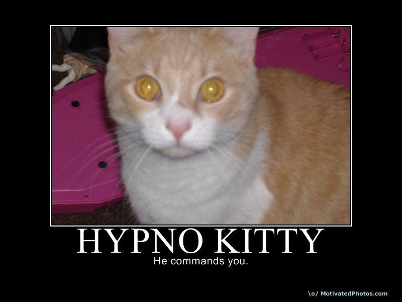 Hypno cat by RAWjunkie
