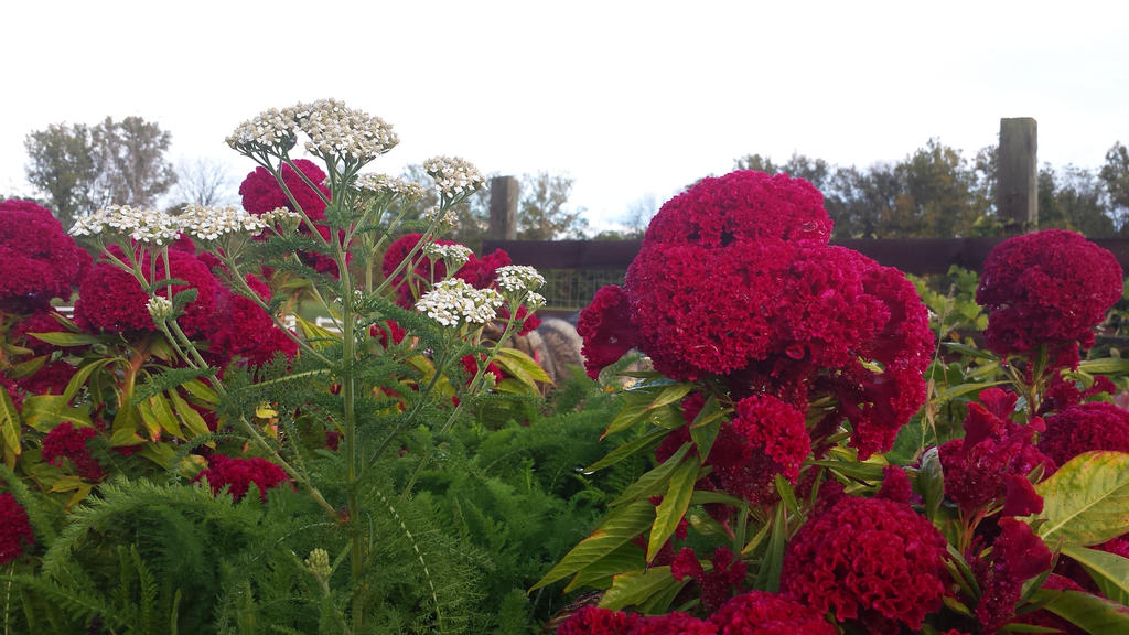 Garden Flowers by rosebai21