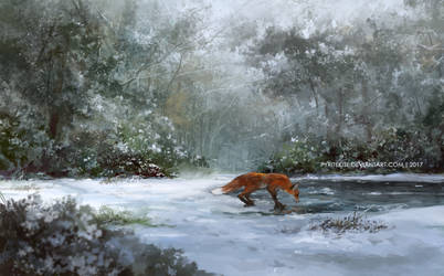 Fox by the pond