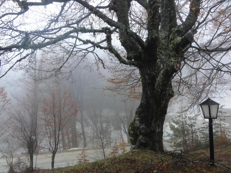 spooky tree by lemorkoff on deviantart
