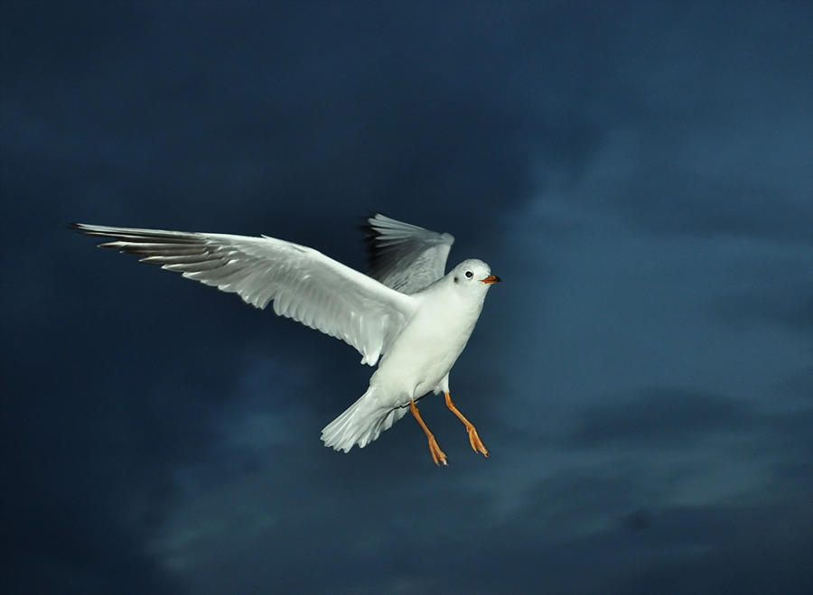 seagull by m-gosia
