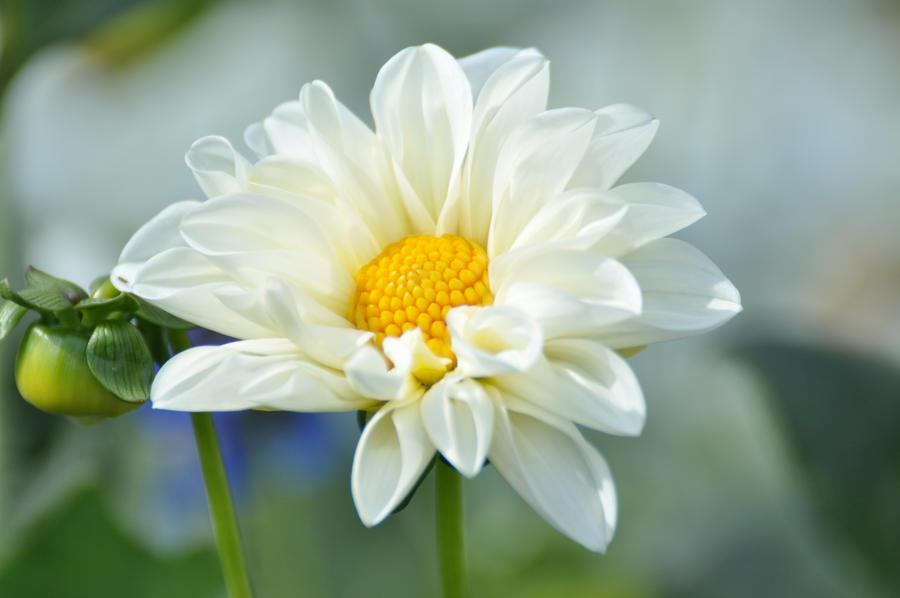 flower by m-gosia