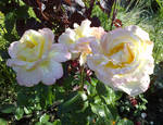 Bouquet by m-gosia
