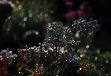 In drops of dew