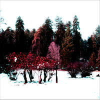 perivoj pod snijegom by carrolsmith