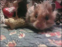 Squiggles by m3ru