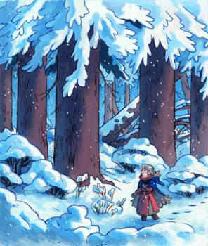 Redwoods in Winter