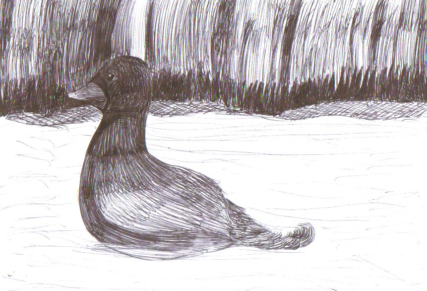 Duck by Lilaaku