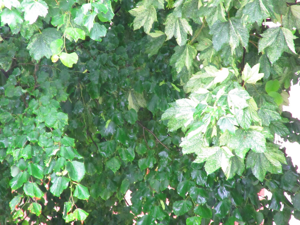 Tree by Lilaaku