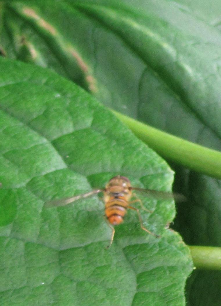 Wasp by Lilaaku