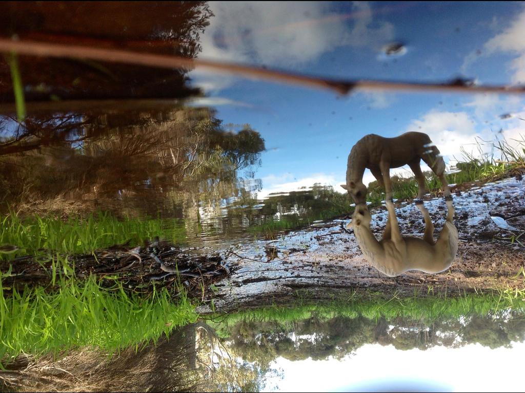 The mirror of Illusion. by Flyingfetlocks
