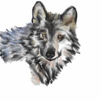 Timber Wolf Digital Charcoal by starfleet