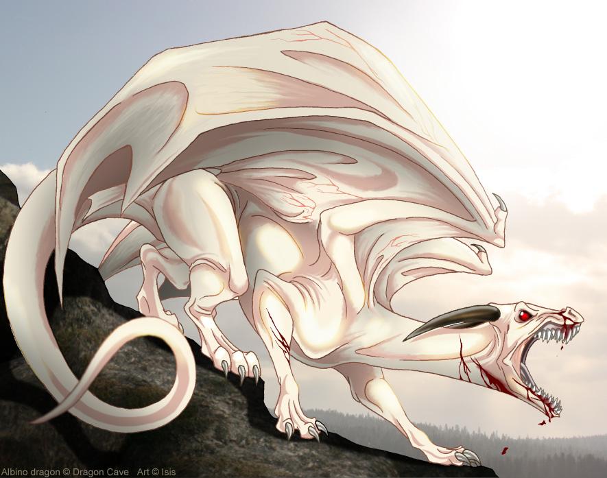http://fc09.deviantart.net/fs71/f/2010/353/3/c/albino_dragon_by_isismasshiro-d357z2e.jpg