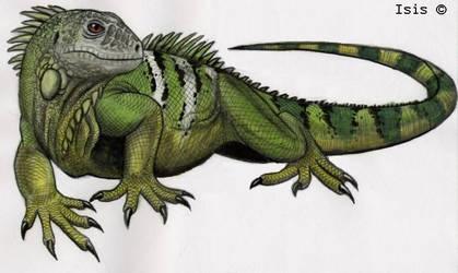 Iguana by IsisMasshiro