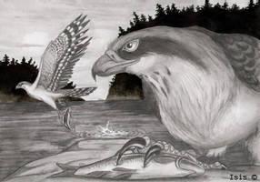 Falcons by IsisMasshiro