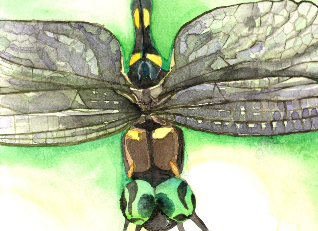 Dragonfly (Off-Center) by AjaxTelamoneis
