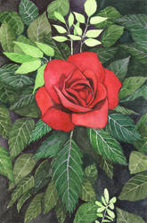 Rose with Dark Leaves