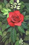 Rose with Dark Leaves by AjaxTelamoneis