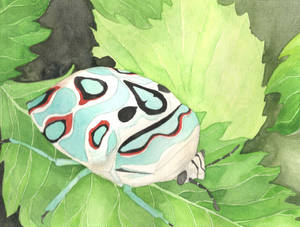 Another Picasso Bug