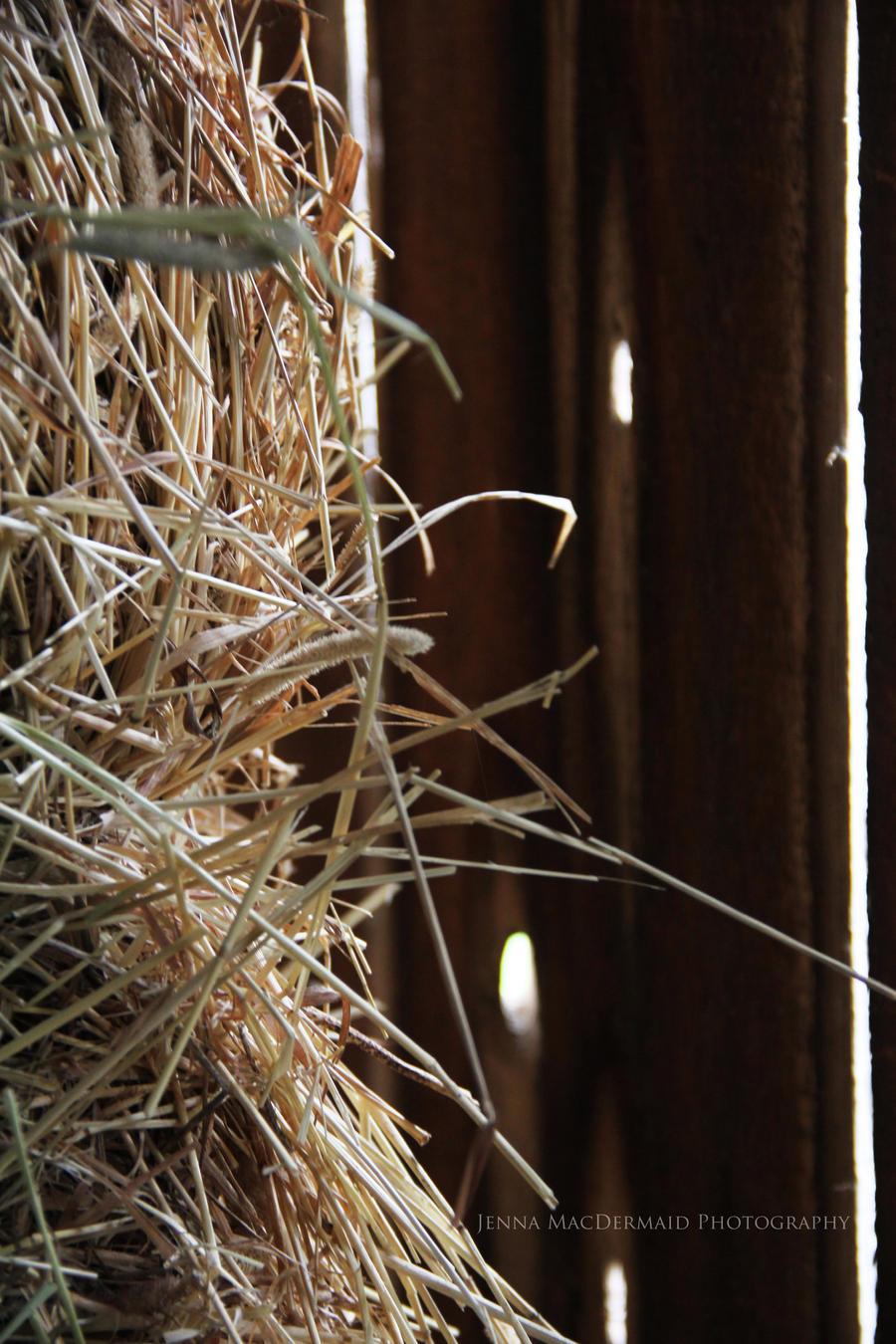 Hay by iammackey