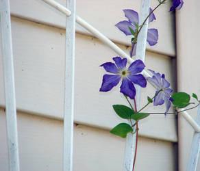 Lonely Purple
