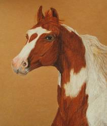 Skewbald Arabian horse by imargarita