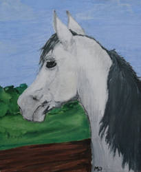 White Arabian Horse by imargarita