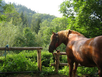 Polish Horse by imargarita
