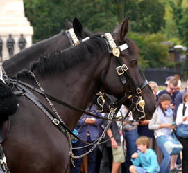 Guard Horse by imargarita