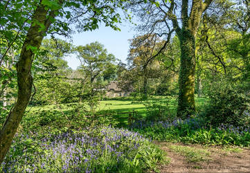 Cottage in Dorset through bluebell woods- Updated by UK-Shots