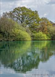 Reflections at Creekmoor Tarn, Dorset by UK-Shots