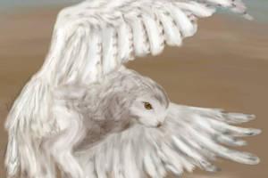 Snowy Owl by Alecat