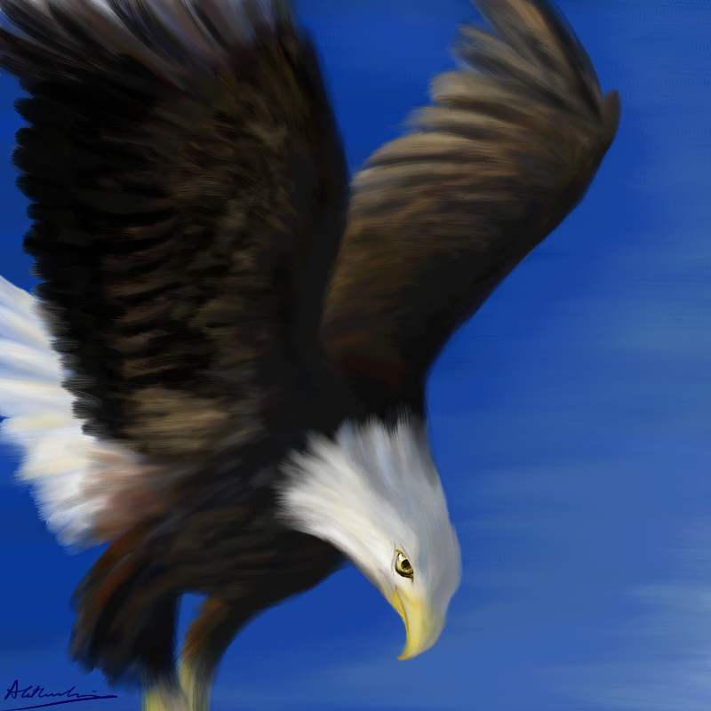 Bald Eagle by Alecat