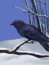 Snow white, Crow black. by Alecat