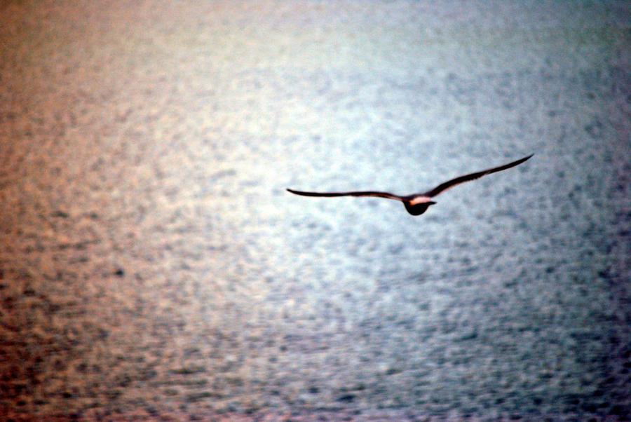 seagull IV by Kitty-Kitty-Kit-Kat