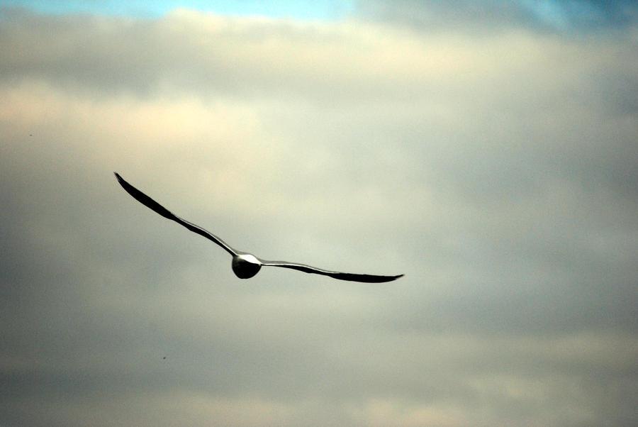 seagull XII by Kitty-Kitty-Kit-Kat