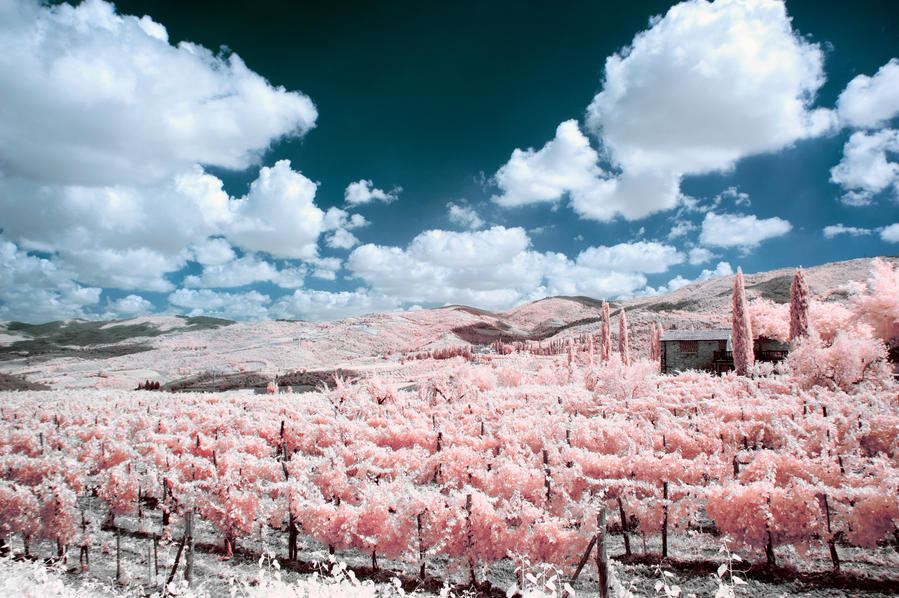 Tuscany IR by insolitus85