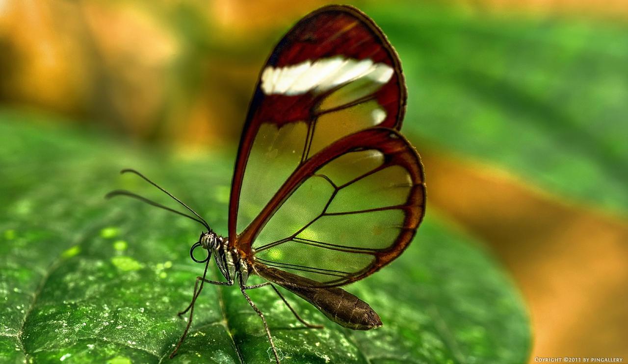 Butterfly - Espejitos