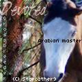 Arabian master's Avatar by Starcather9