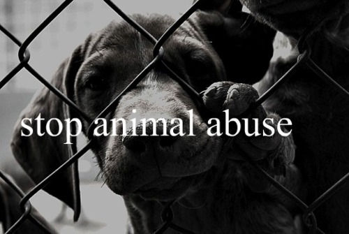 Stop animal abuse. by cutemoments